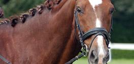 Equine veterinary services