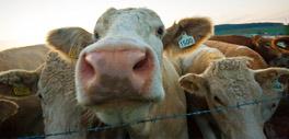 Farm animal veterinary services