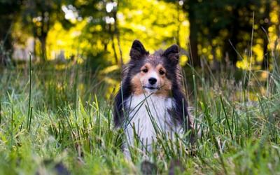 Pet Health Articles