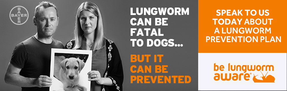 lungworm in dogs